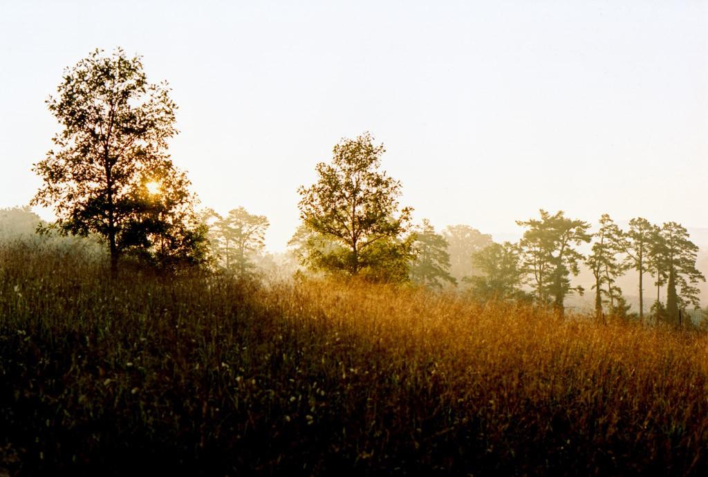 Natchez USA – Tom Haller Zürich